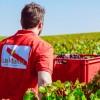 Champagne-mumm-savoir-faire-harvest-02.jpg